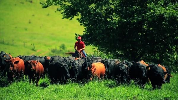 Casa Branca venderá fêmeas e touros Angus em Avaré (SP) no dia 23 de junho
