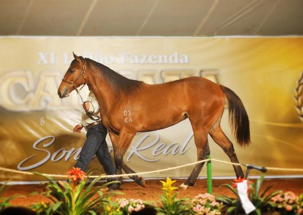 Mercado de cavalos se aquece com competições e leilões