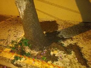Corpo de Bombeiros é acionado para conter invasão de abelhas em Cerqueira Cesar (SP)