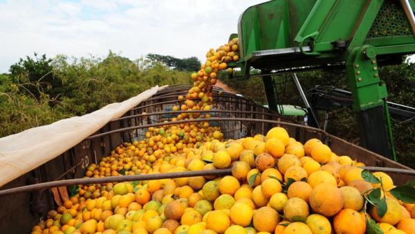 Justiça condena Cutrale por irregularidades trabalhistas