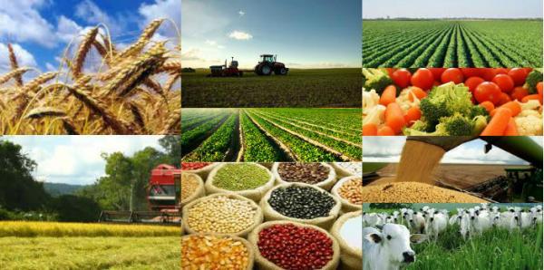IEA: preço agropecuário recebido por produtor paulista sobe 0,44% em janeiro