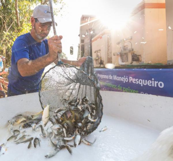Rio Paranapanema recebe 400 mil peixes