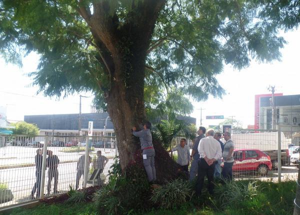 "Secretaria Municipal do Meio Ambiente fará corte da ""Árvore Delegada"""