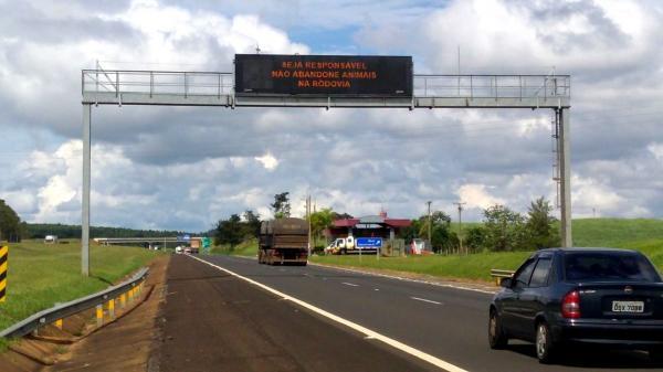 CCR SPVias apoia campanha da ARTESP sobre abandono de animais na rodovia