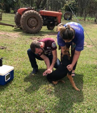 Mais de 2 mil animais foram imunizados contra a Raiva na zona rural de Botucatu