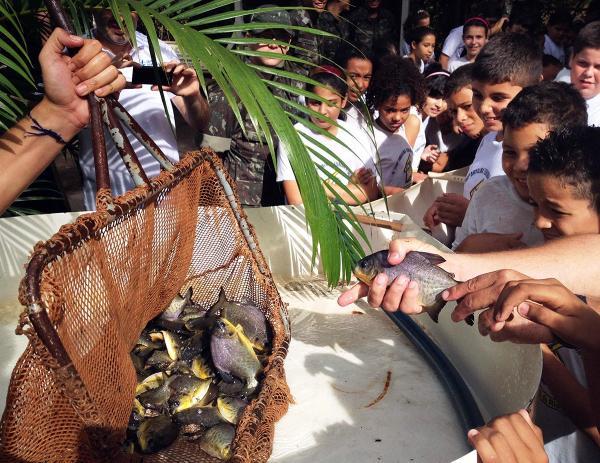 CTG solta mais de 285 mil peixes no Rio Paranapanema