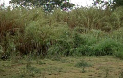 Mato alto em terreno atrai animais peçonhentos e preocupa moradores em Avaré